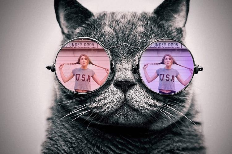 Tạo khung  ảnh mèo đeo kính cực ngầu